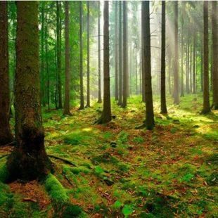 Nuovi boschi in Lombardia ottengono il bollino verde