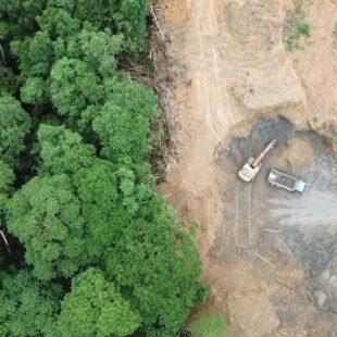 Le abitudini alimentari portano alla perdita di 4 alberi ogni anno