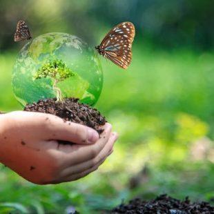 L'ONU vara un piano per ridurre la perdita di biodiversità